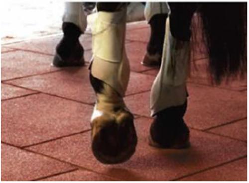 Horse Stable flooring